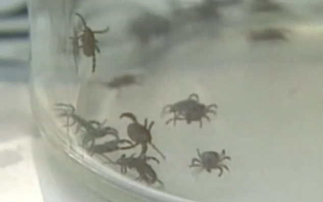 House committee approves Lyme legislation to be added to federal program